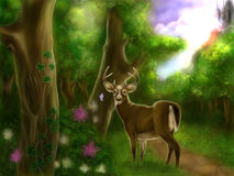 Еnchanting forest with lovely deer. Fairytale about Еnchanting forest and one lovely deer drawing Royalty Free Stock Images