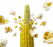 Ncob explodes and produces popcorn healthy vegetarian food Royalty Free Stock Photography