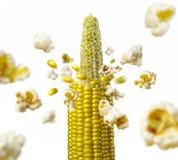 Ncob explodiert und produziert gesundes vegetarisches Lebensmittel des Popcorns lizenzfreie stockfotografie