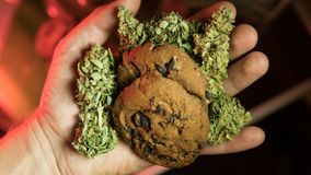 Nculinary products from marijuana. Baking cookies from cannabis close-up. royalty free stock photo