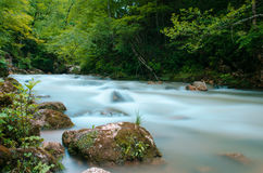 ND过滤器照片 牛奶水流量急流小河 高加索落矶山脉河在森林里 库存图片