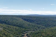 Ndlovu-Ausblick - Addo Landscape Lizenzfreie Stockbilder