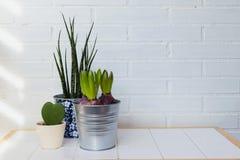 Ndoor rośliny w domu Tło z przestrzenią fotografia royalty free