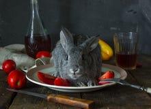 Ne mangez pas du lapin Photos libres de droits