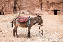 Âne se reposant en Petra Aqba Jordan photographie stock libre de droits