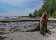 Neah Bay Beach and tree royalty free stock image