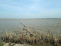 Neajlovului Delta. View over the delta of Neajlov River in Comana, Ilfov, Romania Stock Image