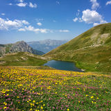 Neal lake with flowers in the foreground, Queyras, the Alps Stock Photo
