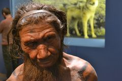 Neanderthal caveman. Reconstruction of Neanderthal caveman man at Natural History Museum in London stock photo