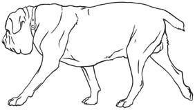 Neapolitan Mastiff dog breed. Neapolitan Mastiff, Italian Mastiff, Mastino Napoletano dog breed vector illustration from the dog show sign symbol set Royalty Free Stock Photos