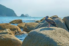 Near the beach, on the rocks sitting bird, beautiful sea bird poses at the seaside. Royalty Free Stock Images