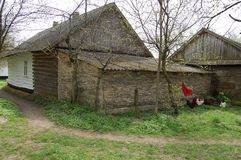 The peasant wooden hut is covered with roofing slate. Near the building go chickens. There is a path near the house. Near the trail grow grass and trees Stock Photos