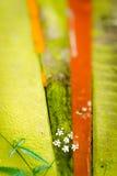 Near färgbräden för växt Royaltyfri Bild