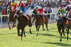 Near the finish line. Horse Racing photo shot near the finish line Royalty Free Stock Photos