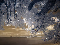 Near infrared of beautiful beach Stock Photos