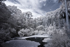 Infrared view of forest and water Stock Images