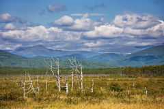 Near from Kema river. Far from Vladivostok, Russia, Far-East stock photography