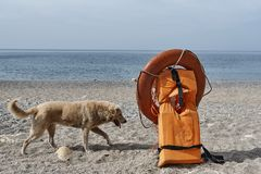 life jacket and rescue ring stock images