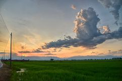 Sunset over the rice fields royalty free stock photography