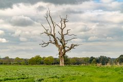 Near Moreton, Jurassic Coast, Dorset, UK. A tree on a meadow with grey clouds, seen near Moreton, Jurassic Coast, Dorset, UK Royalty Free Stock Photos