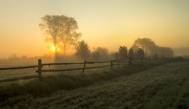 Near my house in the countrysid. Meadow in the glow of the setting sun Royalty Free Stock Photography
