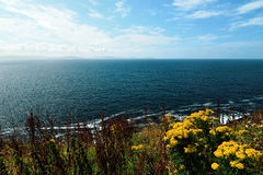 Near the ocean - Cliffs & nature at the coast of Ireland Stock Image