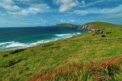 Near the ocean - Cliffs & nature at the coast of Ireland Royalty Free Stock Image