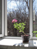 Near an open window in the early spring. In Kharkiv stock photography
