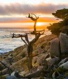 Near punkt Lobos för romantisk soluppgång Arkivbilder