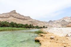 Near rutt 49, Dhofar (Oman) för oas Royaltyfri Foto