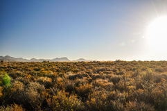 Near rutt 62 för Bush land - Oudtshoorn, Sydafrika Arkivfoton