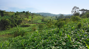 Near Rwenzori Mountains Royalty Free Stock Photo