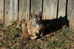Near staket för katt Royaltyfri Foto