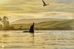 Seal hunting Royalty Free Stock Photo