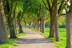 Landscape with old lime tree avenue. Near the town Barth landscape with old lime tree avenue royalty free stock photography
