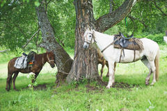 Near a tree horses stand and waiting. Horses stand and waiting near a tree Stock Images
