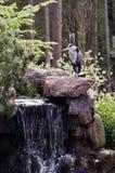 near vilande vattenfall för heron Royaltyfri Fotografi