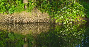 Near water Royalty Free Stock Photography