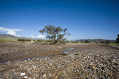 Dry river in Damaraland, Namibia Stock Photography