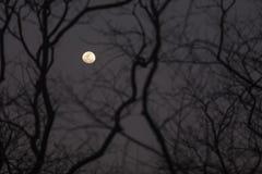 A nearly-full moon stock image