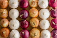 Neat alternating rows of different colored onions. In a full frame food background texture with red, white and brown whole fresh unpeeled onions stock photo