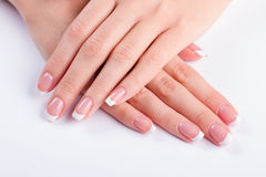 Neat female hands. Stock Photos
