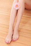 Neat female legs Royalty Free Stock Photography