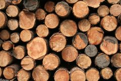 Neat log pile. Saw logs neatly stacked Stock Photo
