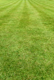 Neat manicured green turf background Stock Images