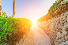 Neat manicured lawns with ornamental shrubs bordering on small road. Neat manicured lawns with ornamental shrubs bordering on a small road leading to the sea at Royalty Free Stock Photos