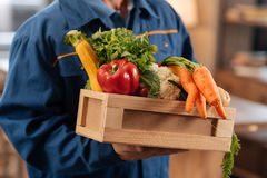 Neat nice courier holding a box full of healthy foods Royalty Free Stock Photography