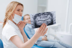 Neat observant dentist holding up an xray. Careful study. Prominent wonderful qualified doctor running tests for diagnosing her patient and running needed Royalty Free Stock Image