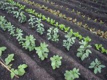 Neat Organic Garden Royalty Free Stock Images