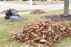 Neat raked pile of dried brown fall leaves. Or foliage on a mowed lawn in a neighbourhood garden with a rake visible behind on the grass Royalty Free Stock Photography